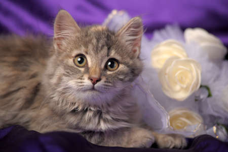 Wedding Bouquet and a cute cat.  photo
