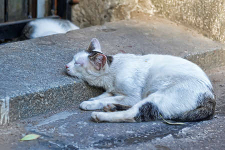 Homeless cats sleep in the street photo