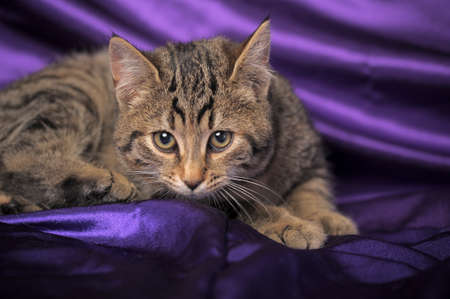 brown tabby kitten Stock Photo - 12052916