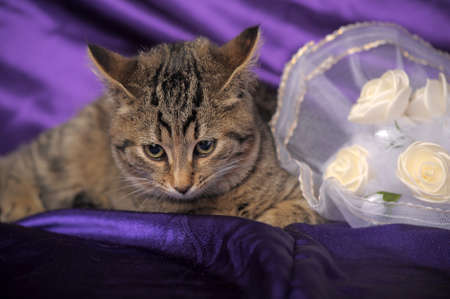 laying forward: brown tabby kitten and a bridal bouquet
