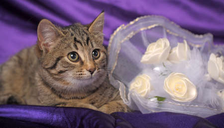 brown tabby kitten and a bridal bouquet Stock Photo - 12052903