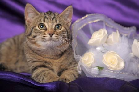 brown tabby kitten and a bridal bouquet photo