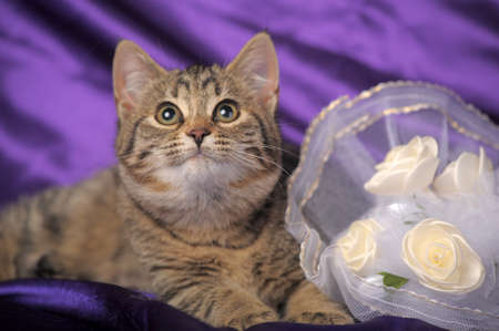brown tabby kitten and a bridal bouquet Stock Photo - 12052900