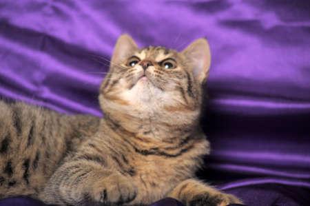 brown tabby kitten Stock Photo - 12053491
