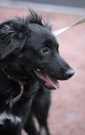 A closeup photo taken on a black dog at a park.  photo