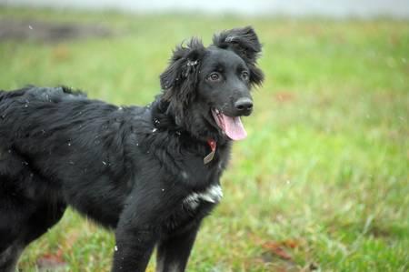 A closeup photo taken on a black dog at a park. Stock Photo - 12053469