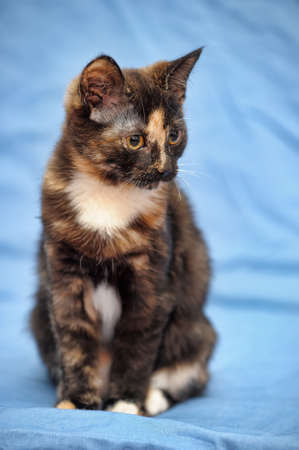 tortoiseshell cat photo