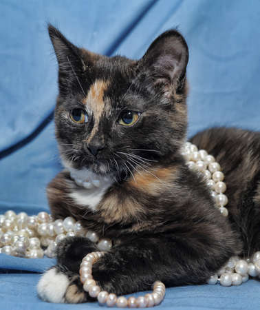 tortoiseshell cat with beads photo