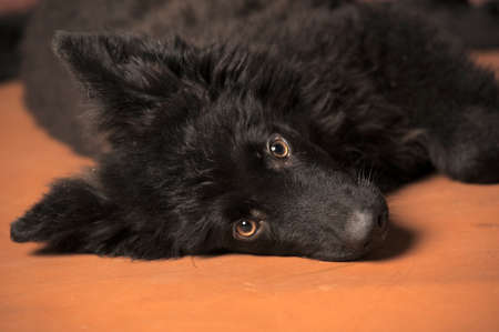 Black puppy photo