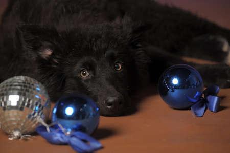 Black puppy Stock Photo - 13280869