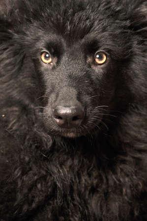 Black puppy photo
