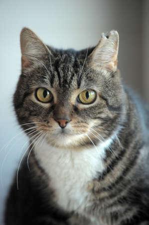 cat portrait photo
