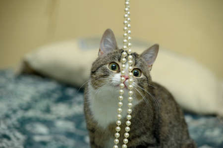 playful tabby cat photo