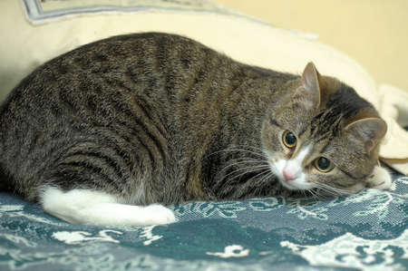 sidelit: playful tabby cat