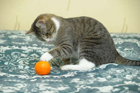 playful tabby cat photo
