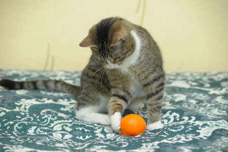 playful tabby cat Stock Photo - 12374703