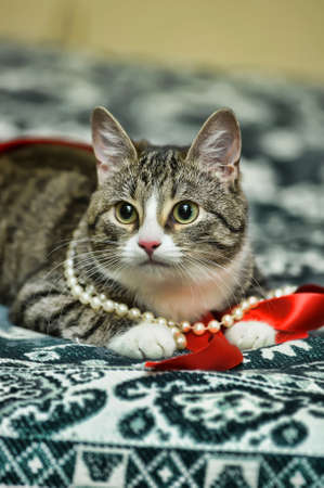 playful tabby cat Stock Photo - 12374700