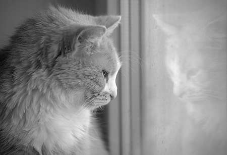 resentful: cat looking out the window Stock Photo