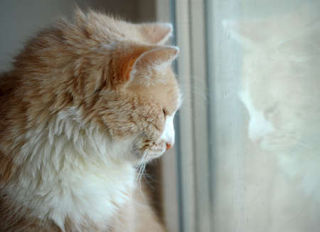 cat looking out the window Stock Photo - 12182764
