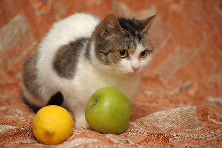 Cat apples photo