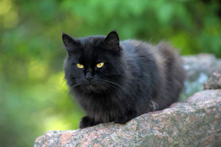 black cat with green eyes  photo