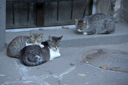 rueful: HOMELESS CATS