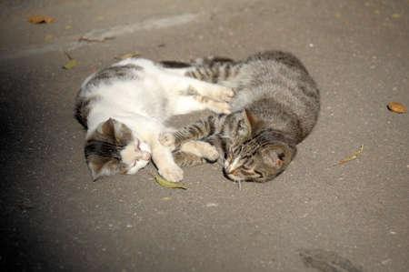 Homeless cats Stock Photo - 12676582