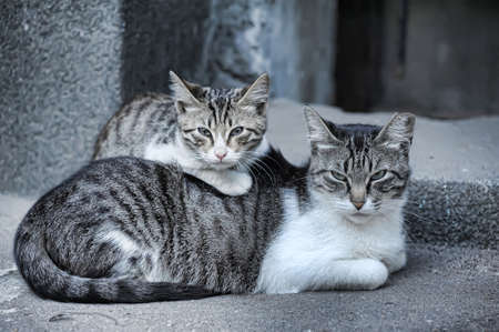 Homeless cats  photo