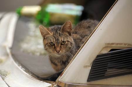 homeless cat Stock Photo - 13253150