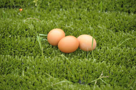 three chicken eggs on grass photo