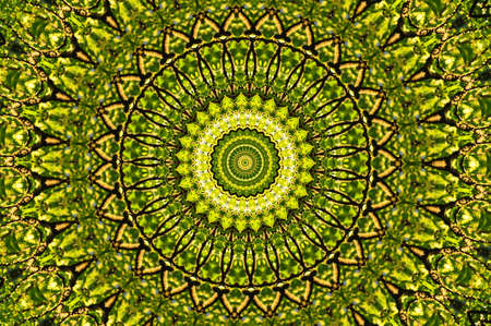 green circular pattern mandala photo