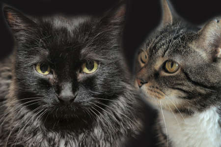 portrait of two cats Stock Photo - 14166505