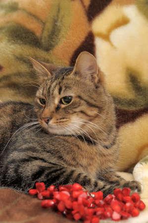 Striped cat Stock Photo - 12674725