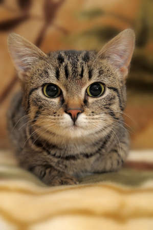 Striped cat photo