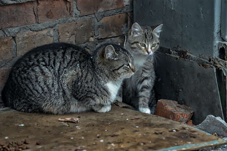 HOMELESS CATS Stock Photo - 12879272