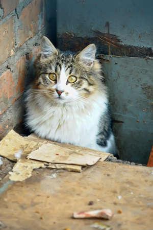 Homeless kitten photo