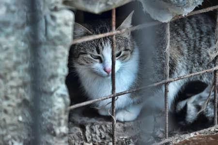 HOMELESS CAT Stock Photo - 12879231