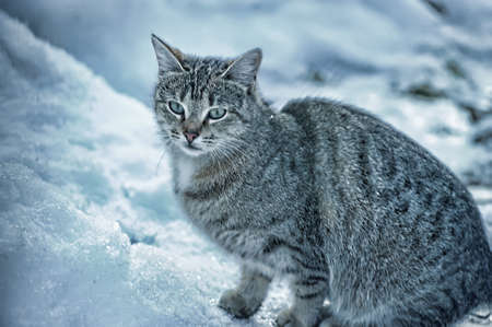 lugubrious: HOMELESS CAT Stock Photo