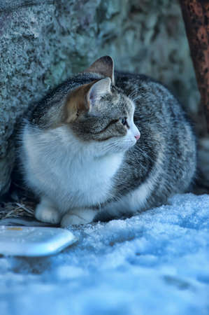 HOMELESS CAT Stock Photo - 12879051