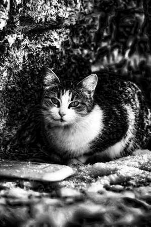plainness: HOMELESS CAT Stock Photo