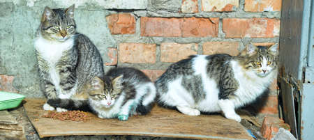 distressful: HOMELESS CATS