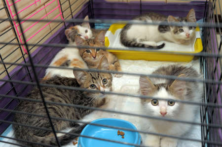 Five kittens isolated in a cage  photo