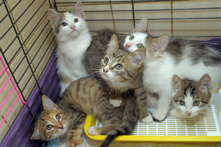 Five kittens isolated in a cage  Stock Photo - 13039558