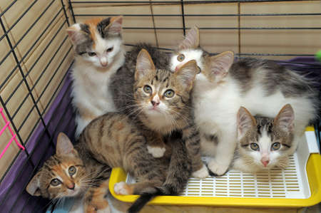 Five kittens isolated in a cage Stock Photo - 13039559