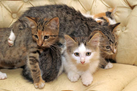 clr: Many Cats  Stock Photo