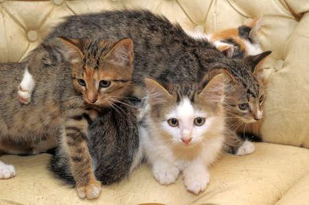 Many Cats  photo