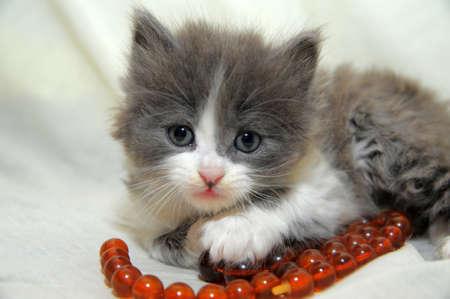 amusing: Small amusing kitten