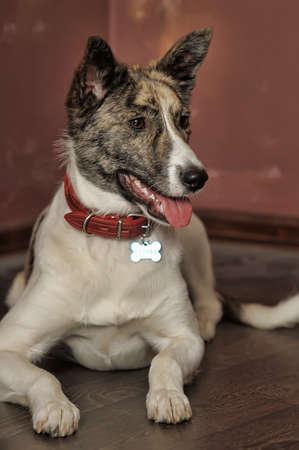 Dog portrait photo