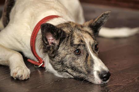 Dog portrait Stock Photo - 13146499
