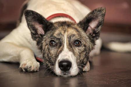 犬の肖像画 写真素材